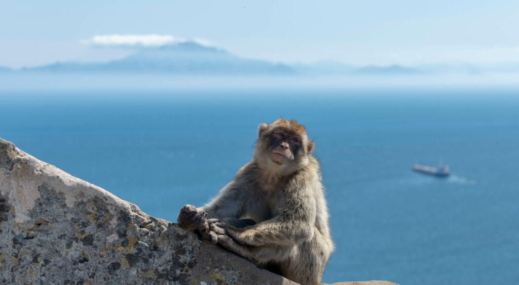 Gibraltar singe