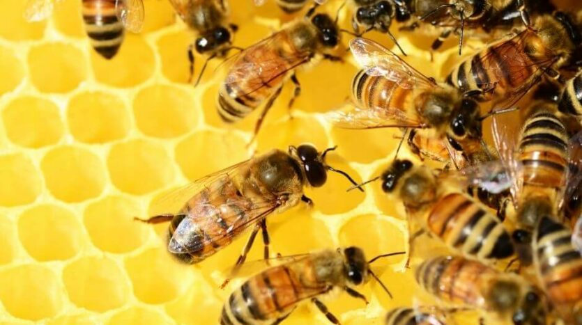 Bijenmuseum colmenar
