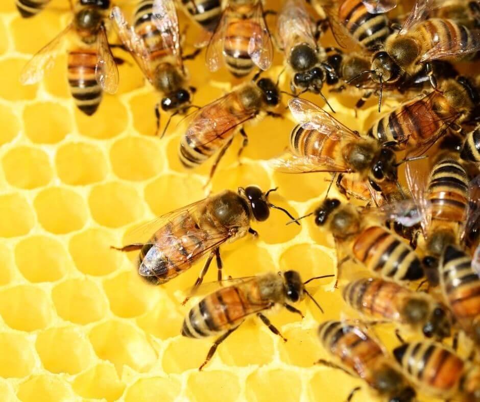 Musée de l'abeille Colmenar, Costa del Sol