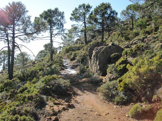 sierra bermeja wandelroutes Malaga
